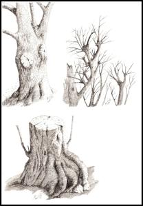 Apuntes en cuaderno de campo sobre arboleda