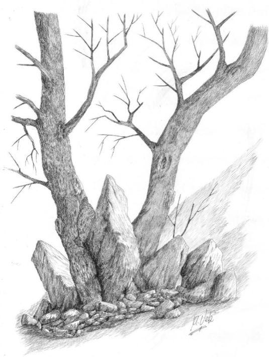 Arbol en rocas