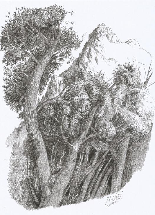 bosque-en-la-canal-de-capozo